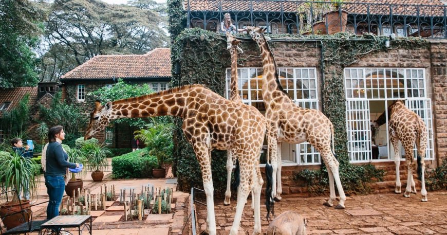 Unique Holiday Destinations in Kenya for Christmas