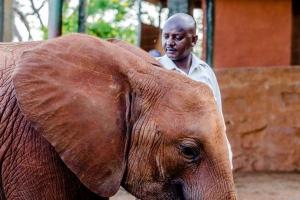 Kenyan Organises Walk in England to Save Elephants