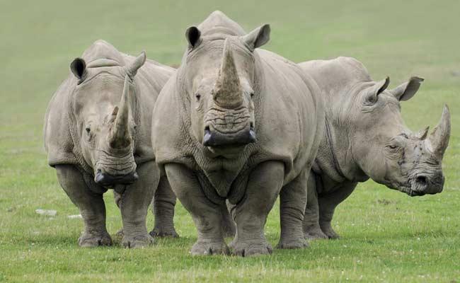 World Rhino Day 2020: How to Support a Rhino