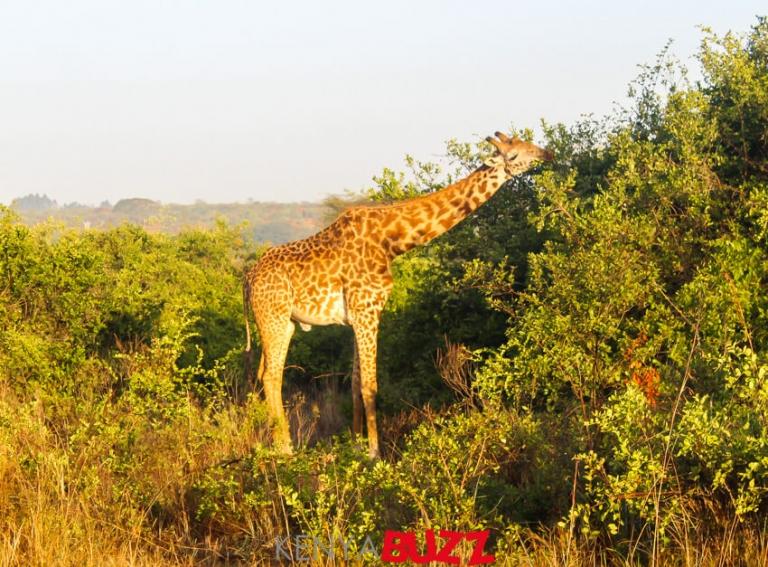Nairobae IG Tour makes a stop at Nairobi National Park for a game drive