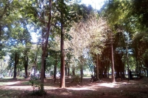 Muliro Gardens and Other Top Places to Visit in Kakamega County