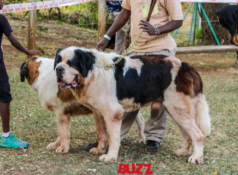 51st LKA Championship Dog show