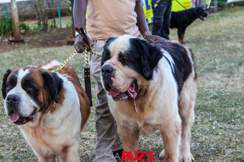 51st LKA Championship Dog Show at East Africa Kennel Club (17/2/2018 and 18/3/2018)