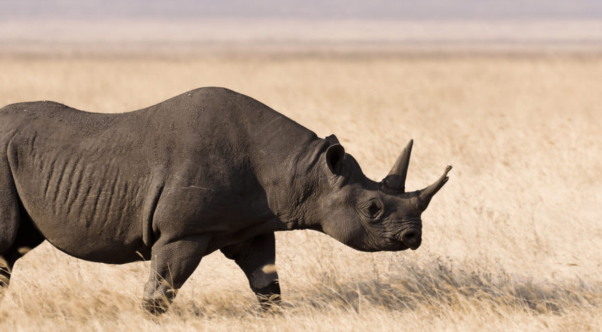 Nine Dead Rhinos are Asking for Justice and Truth