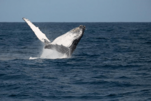 'Official Kenya' Finally Embraces the Coastal Whale and Dolphin Migration