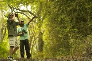 Best Birdwatching Spots in Kenya
