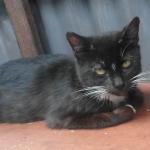 Pet of the Week: Paka