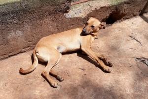 Pet of the Week: Rustie