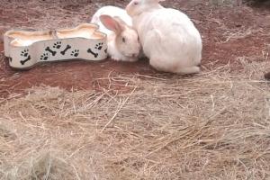 Pet of the Week: Twinnies