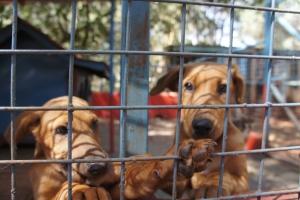New Pet: Puppies
