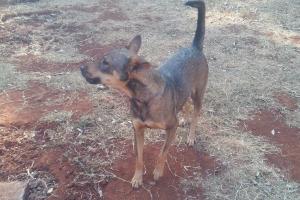 Pet of the Week: Bailey