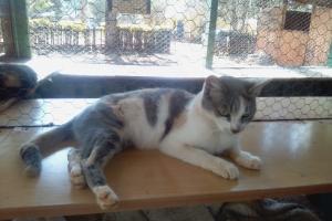 Pet of the Week: Suzzie