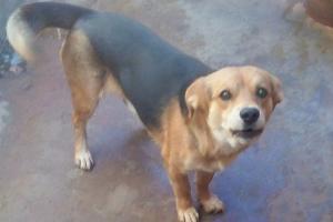 Pet of the Week: Taffy