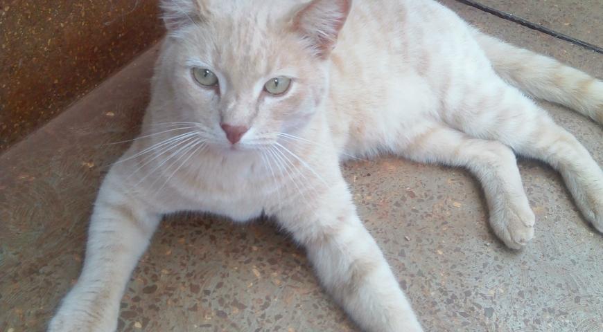 Pet of the Week: Bosco