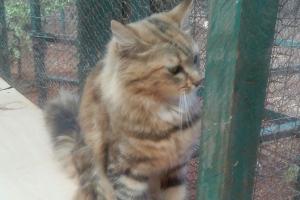 Pet of the Week: Krishna