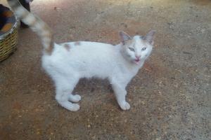 Pet of the Week: Renee