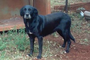 Pet of the Week: Blackee