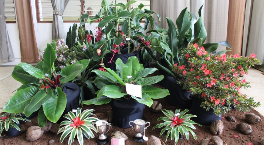 Attend the 2019 KHS Nairobi District Flower and Plant Show