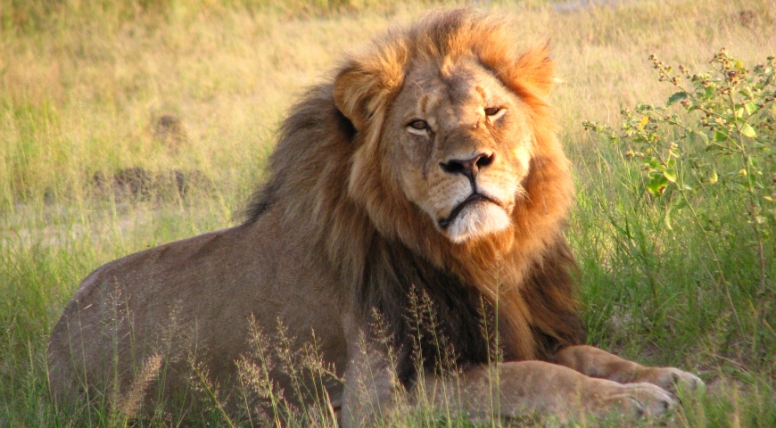 Celebrity Cats: Get to Know Famous Lions of the World