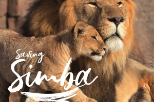 KenyaBuzz July 2019: Saving Simba