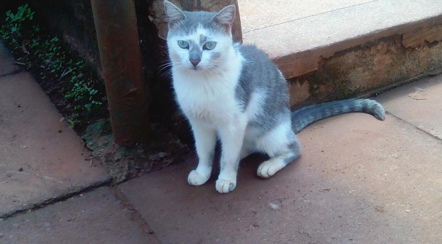 New Pet: Sue