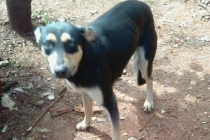 Pet of the Week: Rafiki