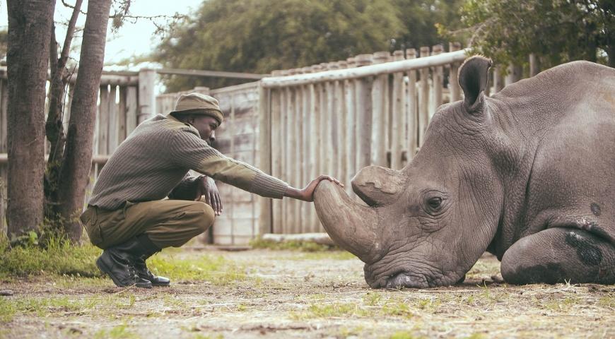A Film Humanising Wildlife Extinction in Kenya