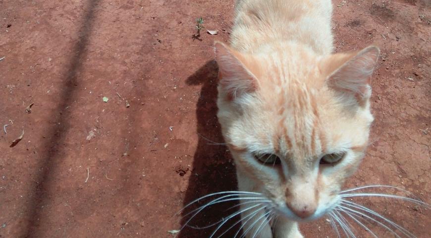 Pet of the Week: Derrick