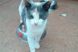 New Pet: Emy