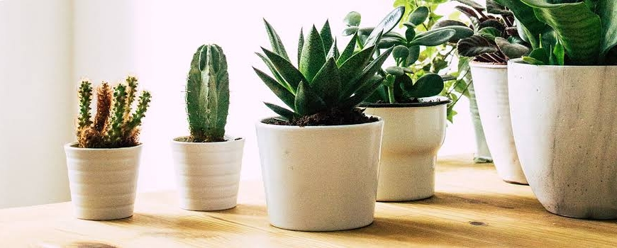 Your Introduction to Plant Parenting