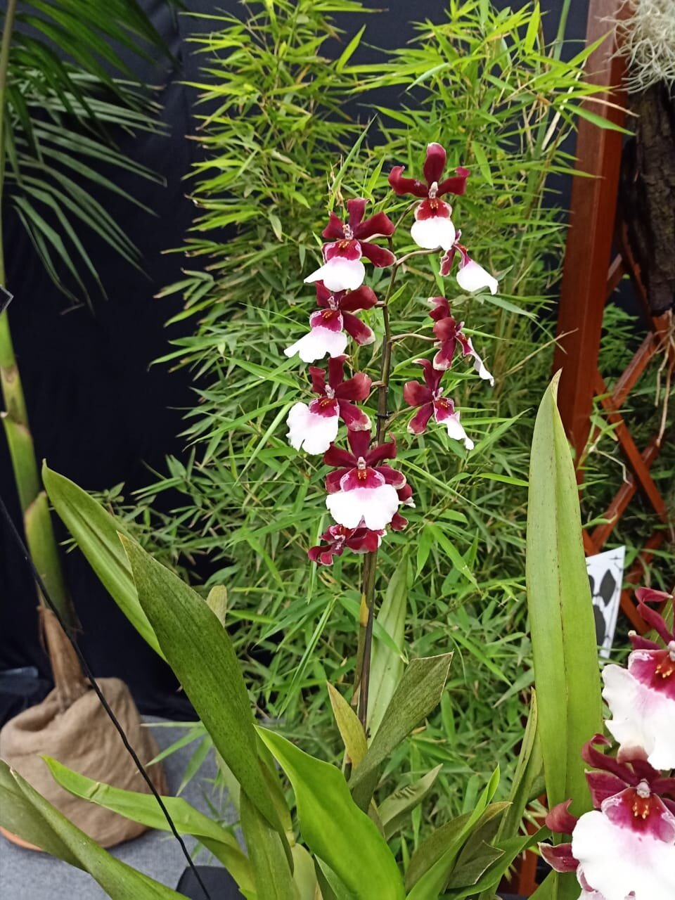 The Orchid Show Kenya