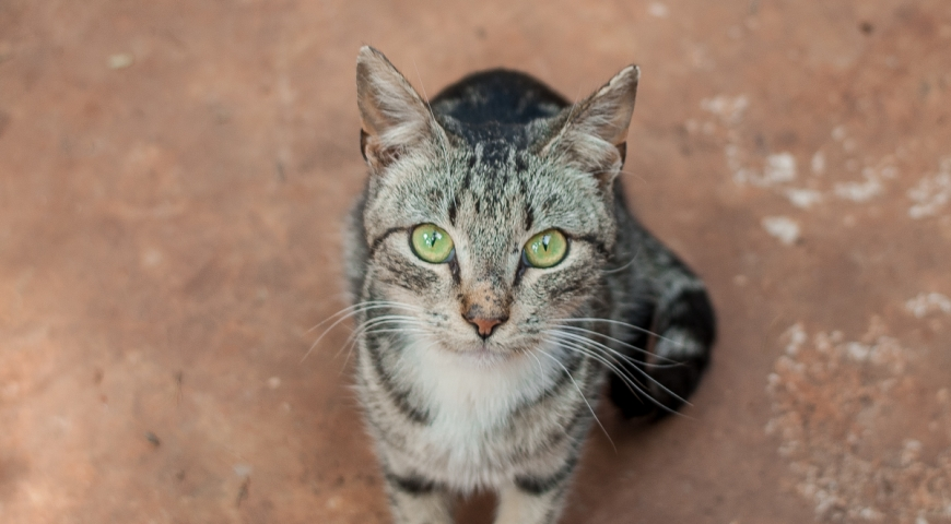 Pet of the Week: Gift