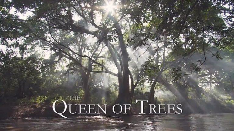 Must Watch: Queen of Trees