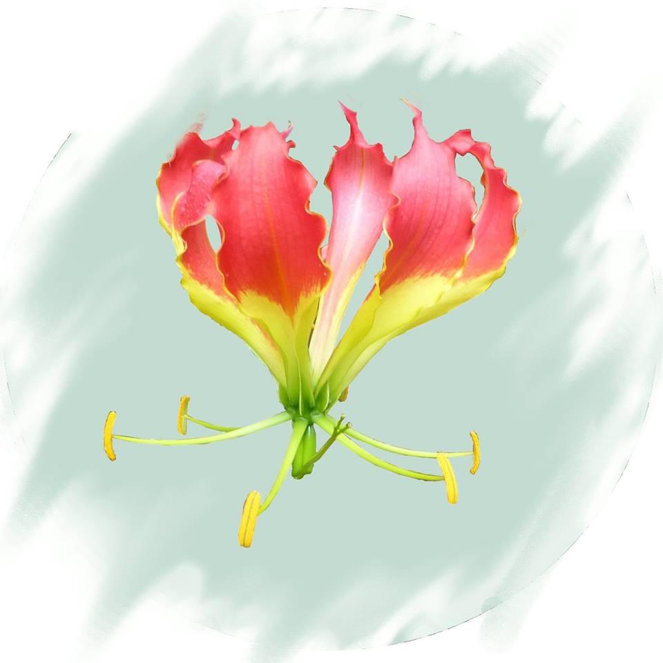 Kenya Horticultural Society