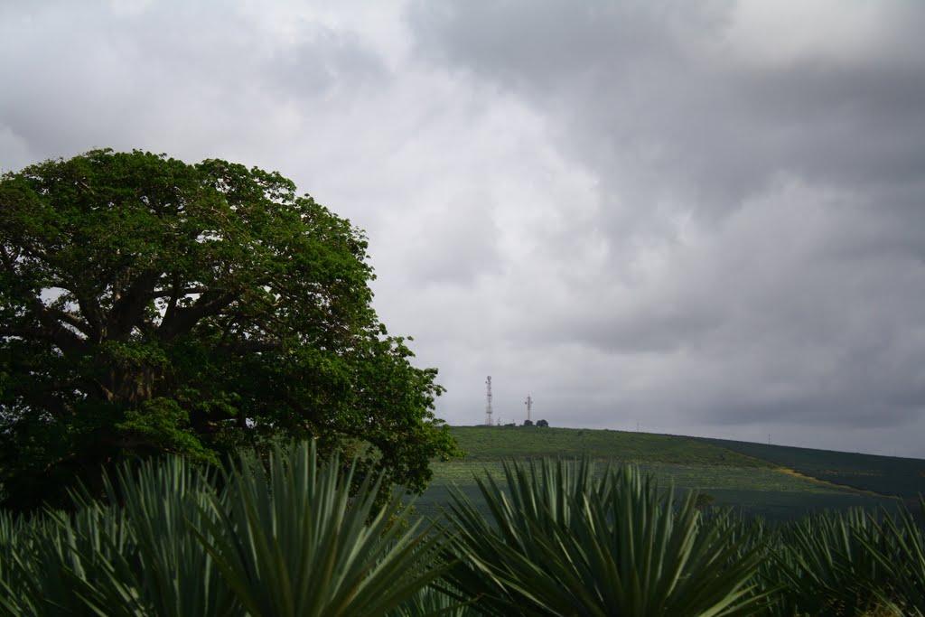 Kilifi Plantations