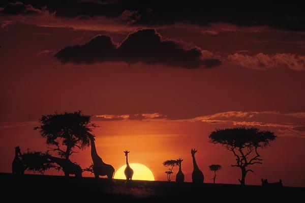 Kimana Camp Masai Mara