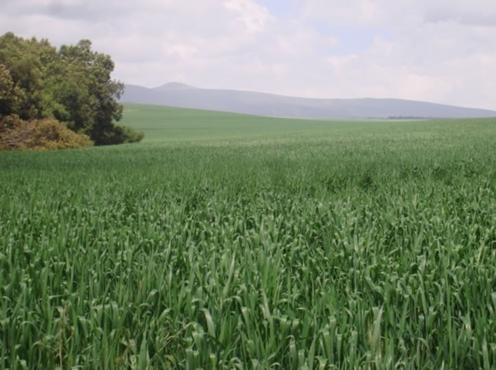 Kisima Farm