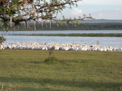 Lake Naivasha: Crescent Island Game Park